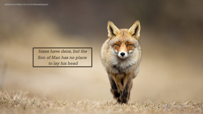 foxes-have-dens-but-the-Son-of-Man-has-no-place-to-lay-his-head-christian-wallpaper-hd_1366x768.jpg